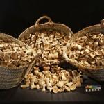 Obr. 9. Část miniaturních nádobek nalezených na severovýchod od hrobky AC29 (M. Frouz)