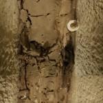 Neferínpu uložený v sarkofágu (foto Martin Frouz)