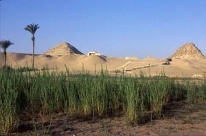 Panoráma královské nekropole 5. dynastie v Abúsíru.