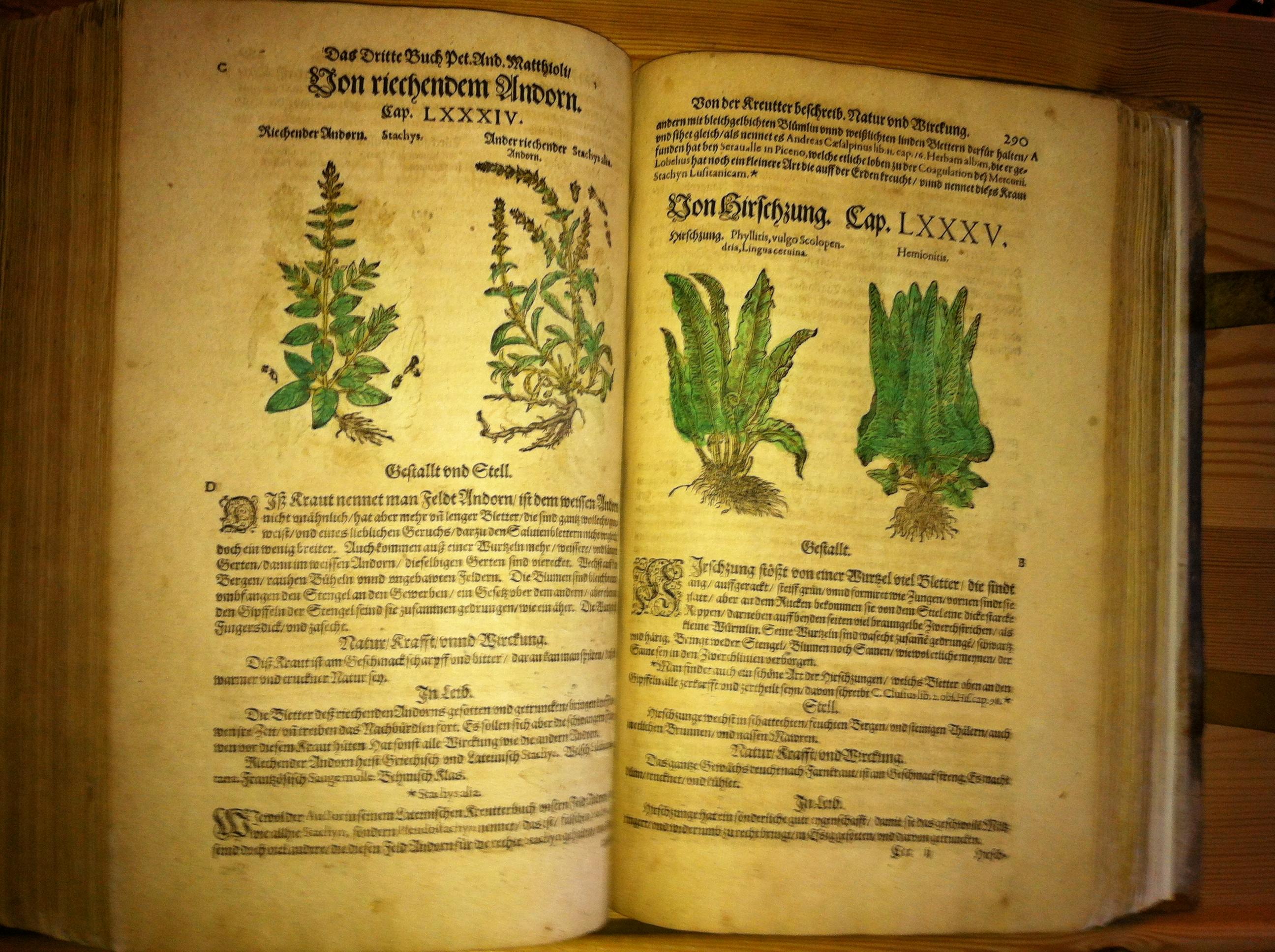 old book zlata koruna